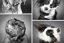 Funny dogs&cats / Śmieszne zdjęcia psów i kotów:)