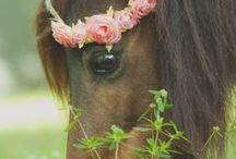 Horse <3