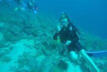 Dive Trip 2015 / Scuba diving in Sharm el Sheikh, Egypt