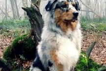 Dogs / This board is full with the most cutest and loveable dogs...