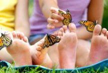 Joy of Butterflies / Butterflies bring great joy!