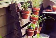 Garden / Veggie, raised garden bed, backyard goodness.