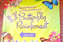 Butterfly Exhibits / Here are some of the butterfly exhibits I have visited and highly recommend.