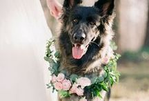 Pets Down the Aisle