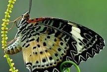 Stunning Butterflies / Enjoy the beauty of butterflies!