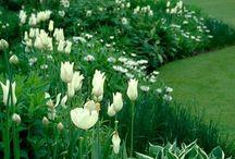 Gardening Ideas / by Jody Scott