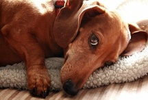 My Puppy Love