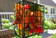 Butterfly Feeders / Additional ideas how to attract butterflies to your garden.