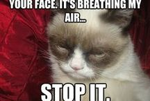 Grumpy cat...'nuff said / Not all cats, just Grumpy Cat / by Tracey Thomas