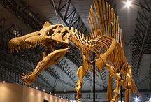 Dinosaurs / Who said dinosaurs were extinct?