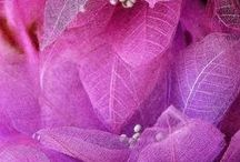 Radiant Orchid / Inspired by the Pantone Colour of the year