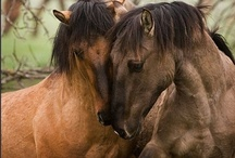 Horse Love / by Debbie Hoots