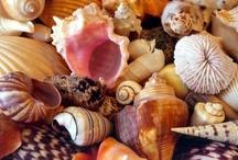 Sea Shells-Stars & Sea Glass / by Miriam Perez