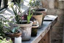 gardening ideas / by Annerien Dykman
