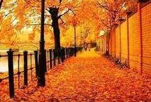 Autumn lovin'