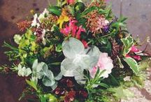 Posies / Posies are the best go to gift - Our florists are always creating the most gorgeous arrangements. Here's a little taste x