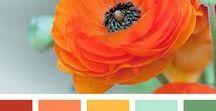 Colors