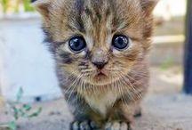 ~ cute ~