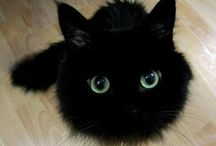 Feelin' Feline! / Why, yes, I am a Cat Lady, thank you very much.