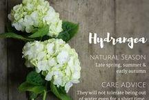 Flower & Foliage Guide