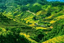 Vietnam Travel Tips / Travel guides and itineraries for visiting Vietnam