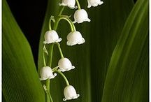 Gardens/Flowers / by Gail Blair