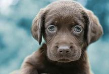 Dogs / by Rachel Roberts