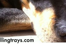 Dr. J's Original Photo's / Nature, landscapes, dogs and starfish..!