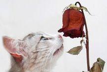 ✧ Red Flowers / Floricele roșii