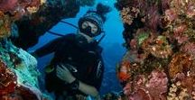 Scuba Diving Around The World / Do you love scuba diving as much as us? Join us in pinning the best scuba content out there! www.girlsthatscuba.com