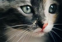 Cats / I love photography + I love my cats = cats' photos :)))
