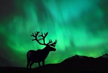 northern lights / by girlwithacake