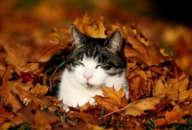 cats_sleeping / by girlwithacake