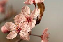 JAHRESZEIT: Frühling