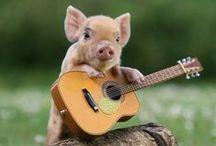 Pigs <3