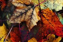 Fall is on my mind / My endless passion to autumn...