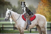 Dogs and Horses / Horses and dogs  / by Cami
