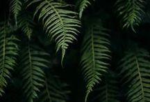 photo verte nature