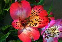 Amazing Flowers / Amazing flowers