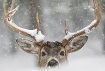 Beautiful Animals *.* / Wild animals, pets and a little cute things.