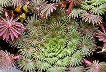 plantas-jardin / by marcela salamone