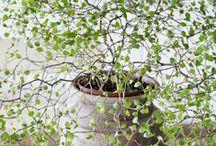 Greenery / plants, plants, plants