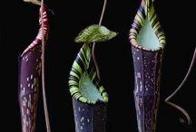 Botany / Floral