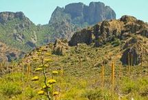 Desert-Mountain Country / The Southwestern desert-mountain country is some of the most beautiful in the U.S. / by Elizabeth A. Garcia Author