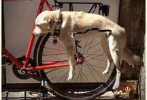 Bringás kutyák / Dogs & Bikes