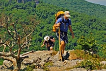 Outdoors / From the wild Florida Everglades to scenic Tennessee mountain trails, the South is a nature-lover's paradise