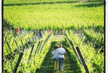 Wine Vineyard Italy / http://www.oilwineitaly.com Nature and good Wine! Vineyard of Italy and all over the world