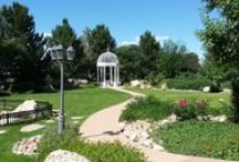 Stonebrook Manor Gardens in Bloom / Every week through the summer and fall of 2014 we will be posting photos of the Stonebrook Manor Gardens.  You will be able to watch the gardens bloom and undergo the changes of the seasons along with us.