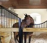 Stable goals