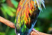 Pássaros Bird